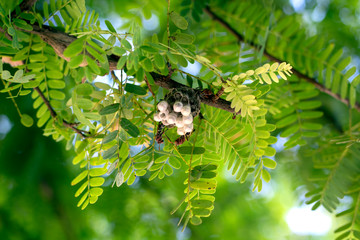 Close-up view,The picture of Hornet's nest