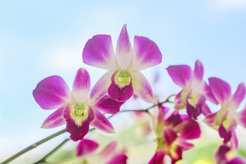 Close up of beautiful purple orchid in garden