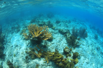 Fototapete - Coral reef in the caribbean sea