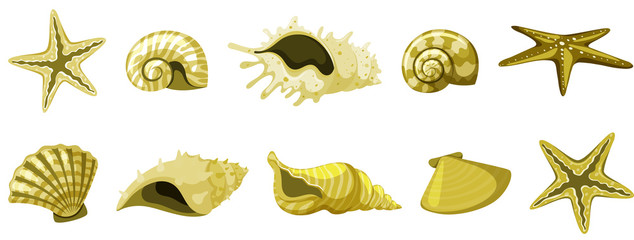 Set of isolated seashells in yellow color