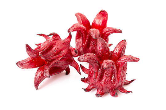Roselle, isolated on a white background. Closeup