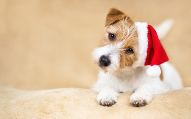 Christmas holiday funny happy cute santa pet dog puppy on beige background with copy space