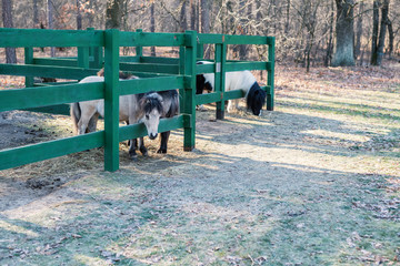 Horses and pony in a horse farm