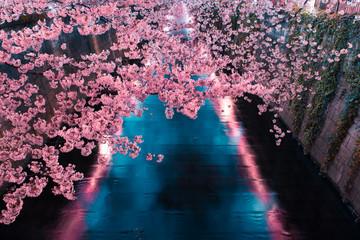 Tuinposter Kersenbloesem 目黒川の夜桜