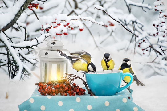 Winter still life. A flock of titmouse birds eat from a cup in a winter garden. Fabulous winter photo. In the background branches with red berries in the snow.