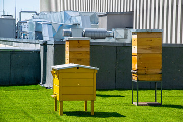 Hives in apiary on the roof of modern building in the downtown