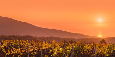 Sun rising over mountain vineyard. Scenic view