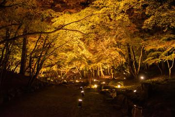ライトアップの醍醐寺・弁天堂