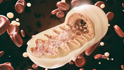 mitochondria cell in close-up - 3D Rendering