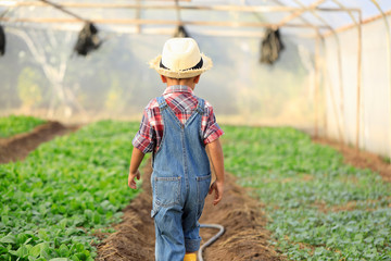 An Asian boy is walking around looking at vegetable plots in an organic greenhouse.