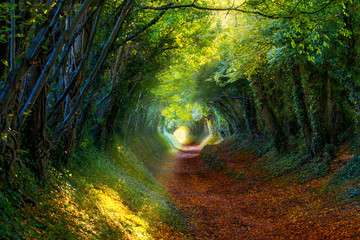 Into the Woods: Pathway through autumnal forest