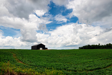 An agricultural field with a wood barn in a rural area of the State of Kentucky, USA.
