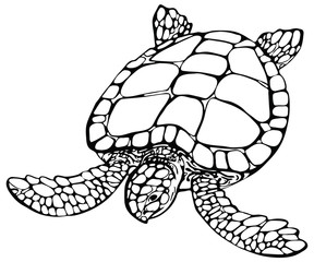 Vector illustration of sea turtle on white background. Perfect for invitations, greeting cards, postcard, fashion print, banners, poster for textiles, fashion design.