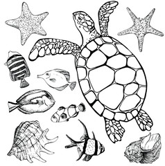 Sea turtle and tropical fish on white. Marine set. Perfect for invitations, greeting cards, print, banners, poster for textiles, fashion design.
