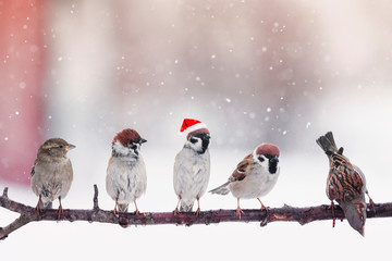 Fototapete - funny little birds sparrows in Santa's festive red hat sitting on a branch under the snow in the Christmas garden