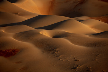 Closeup photo of desert digital wallpaper