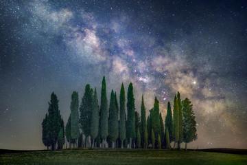 Green pine trees and milky way galaxy illustration Papier Peint