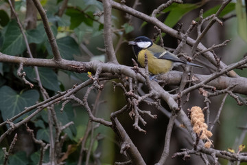 A titmouse sitting on a branch