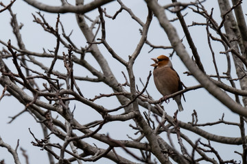 A robin on a branch
