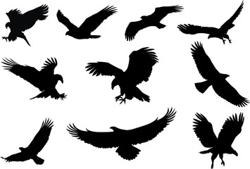 eagle silhouette, fliying bird silhouette