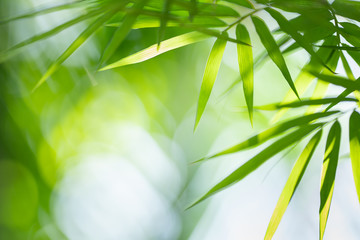 Green nature background. Closeup view of tropical green bamboo leaf on blurred background for natural and freshness wallpaper concept.