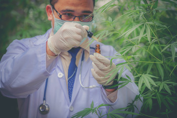 scientist with mask, glasses and gloves checking hemp plants in a greenhouse. Concept of herbal alternative medicine, cbd oil, pharmaceptical industry