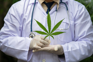Medical researchers shake hands with marijuana, medical concepts, symbols