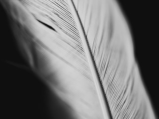 closeup of a feather Fototapete