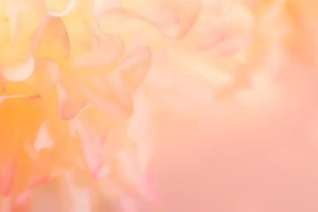 Beautiful abstract color pink orange and white flowers background and pink flower frame and white and pink leaves texture background