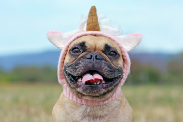 Fotorolgordijn Franse bulldog Portrait of happy smiling French Bulldog dog with wearing a funny knitted pink unicorn hat costume
