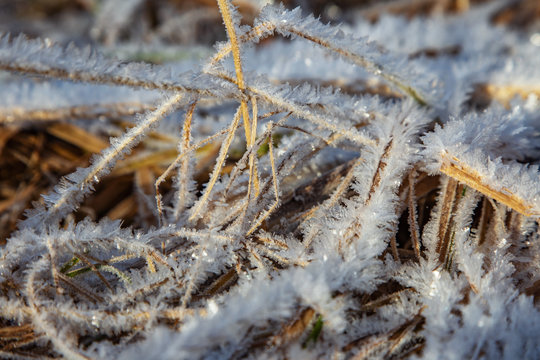 White, whimsical crystals of frost covered stalks of withered grass. Off-season.