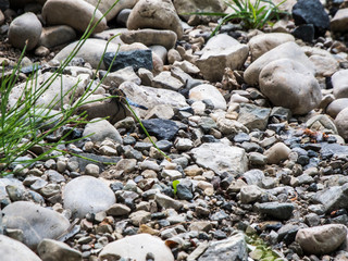 Dry riverbed with dragonfly
