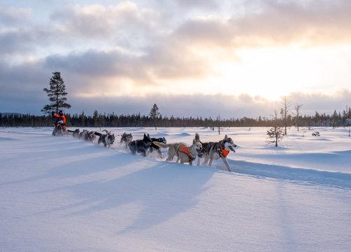 Dog sledding in Jamtland, Sweden
