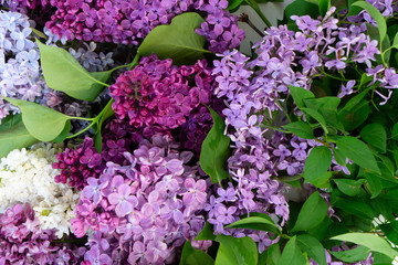 Photo sur Aluminium Lilac Fresh lilac flowers