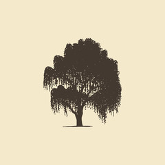 Willow or Birch, hand drawn silhouette. Vector sketch of deciduous tree.
