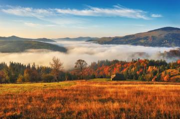 Foto auf Acrylglas Beige autumn morning. Dawn in the Carpathian mountains. foggy autumn sunrise