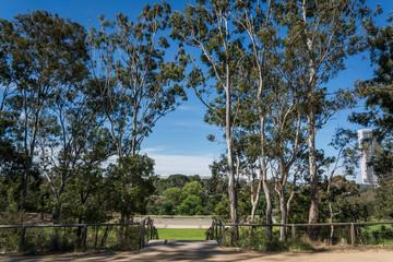 Parramatta Park in the western suburb of Parramatta, Sydney, Australia