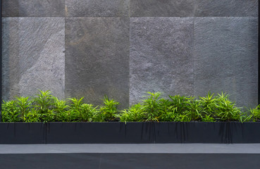 Natural green tree plant with the granite gray wall interior decoration contemporary