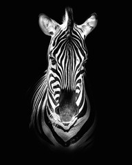 Photo Blinds Zebra Burchell's zebra (Equus quagga burchellii)