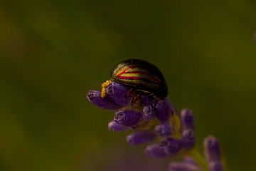 Beetle sitting on a flower