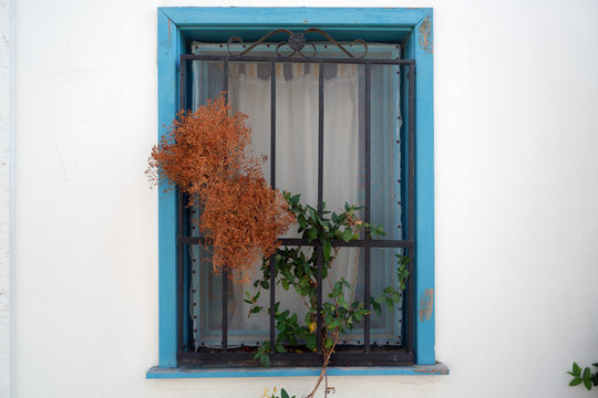 Shutterless blue window of a village house with iron bars and swatter on white wall. There are also dried centaury plant and live ivy.