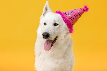Cute funny dog with party hat on color background