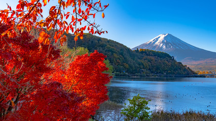 Wall Murals Magenta Beautiful landscape view of Mt.fuji famous landmark of Japan.