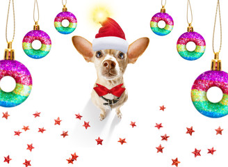 In de dag Crazy dog christmas santa claus dog and xmas balls or baubles hanging
