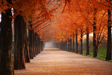 Aluminium Prints Autumn Rows of trees lining long empty park path or footpath in the autumn fall