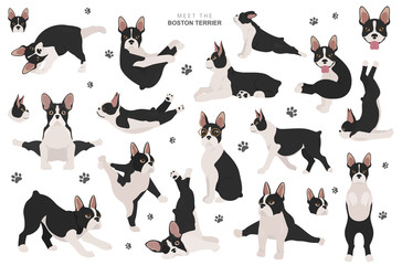 Boston terrier clipart. Dog healthy silhouette and yoga poses set