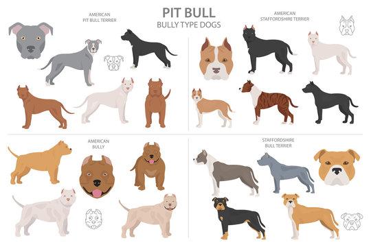 Pitbull terrier varieties_1
