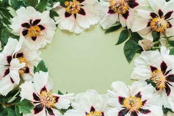 Round frame wreath border of white peonies flowers. Flat lay, top view minimal floral copy space...