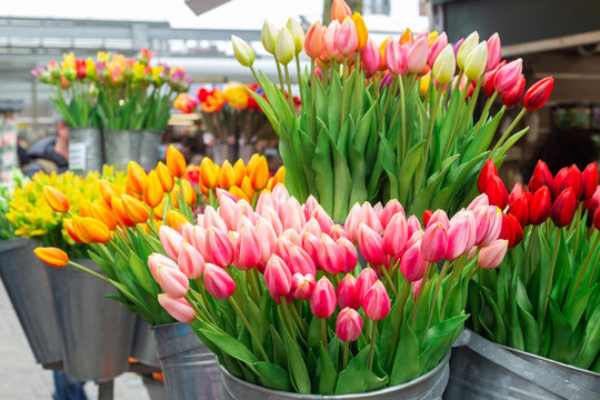 Bunches of beautiful tulip flowers for sale in a flower market. Colorful tulips. Florist service. Woman day