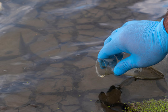 A water sample from the river. Hand in glove collects water in a test tube. ecology concept